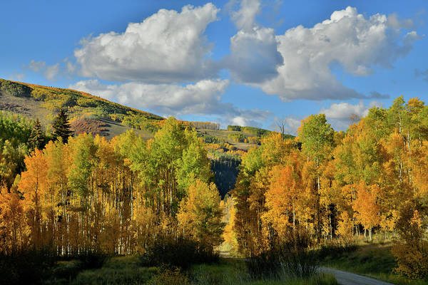 Photograph - Fall Colors Along Road To Woods Lake by Ray Mathis