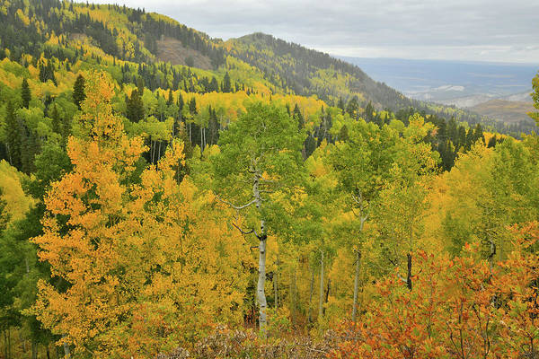 Photograph - Fall Colors Along The Descent From Owl Creek Pass by Ray Mathis