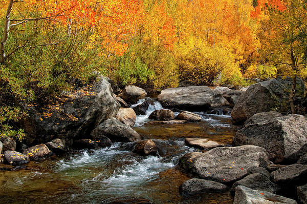 Sierra Nevada Mountain Range Photograph - Fall Colors Along The South Fork Of by Bill Wight