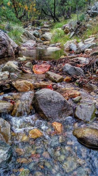 Photograph - Fall Colors At Madera Creek by Chance Kafka