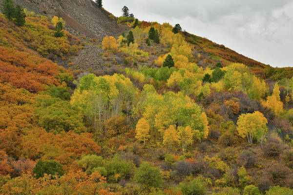 Photograph - Fall Colors En Route To Owl Creek Pass by Ray Mathis