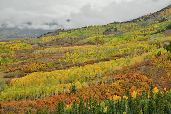 Photograph - Fall Colors Galore Near Owl Creek Pass by Ray Mathis