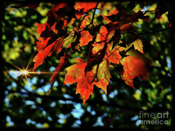 Wall Art - Photograph - Fall Colors In Quebec II by Al Bourassa