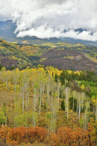 Photograph - Fall Colors In The San Juans by Ray Mathis