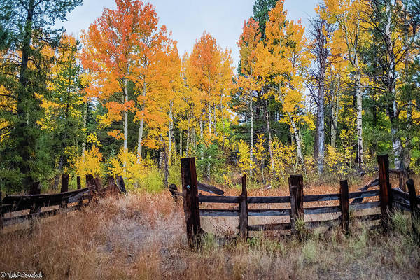 Photograph - Fall Colors by Mike Ronnebeck