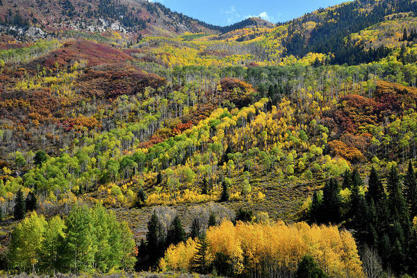 Photograph - Fall Colors Near Mcclure Pass by Ray Mathis