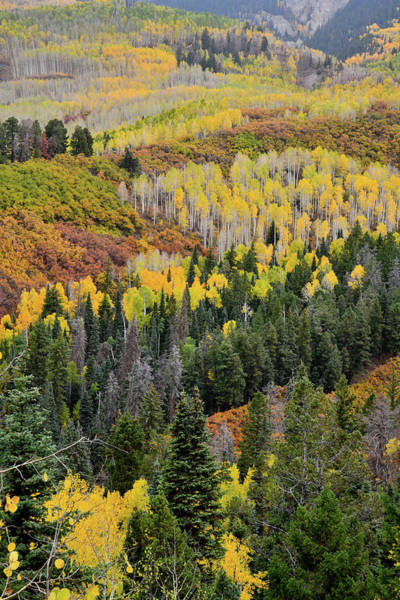 Photograph - Fall Colors Near Owl Creek Pass by Ray Mathis