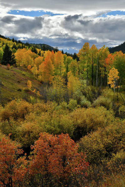 Photograph - Fall Colors Peak Near Dallas Divide by Ray Mathis
