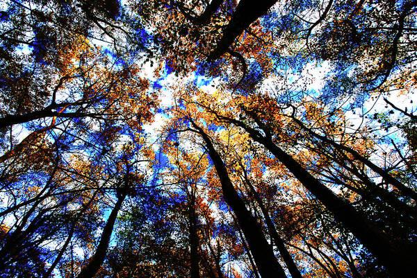 Photograph - Fall Colors, Potomac Overlook Park by Bill Jonscher