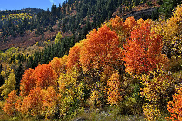 Photograph - Fall Comes To Mcclure Pass Area by Ray Mathis