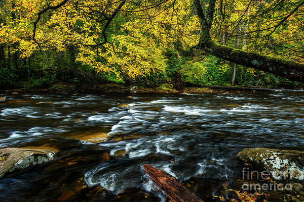 Photograph - Fall Day On Cranberry River by Thomas R Fletcher