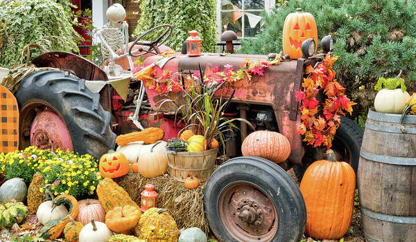 Photograph - Fall Decor by Nick Mares
