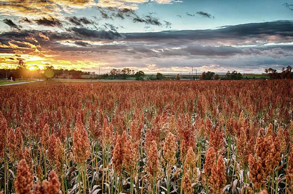 Photograph - Fall Field by Dan Urban