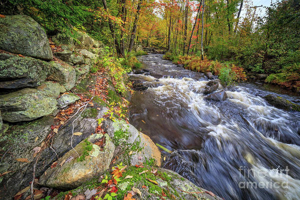 Photograph - Fall Foliage Brook Grantham New Hampshire by Edward Fielding