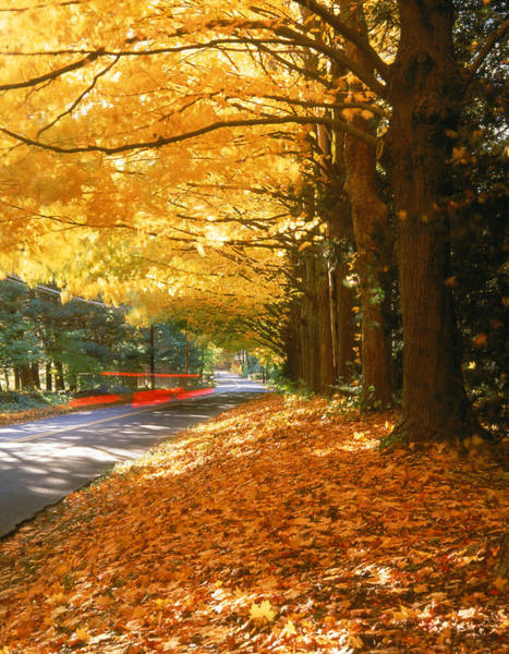 New England Autumn Photograph - Fall, Foliage, Ct by Bud Freund