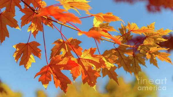 Photograph - Fall Foliage by Dheeraj Mutha