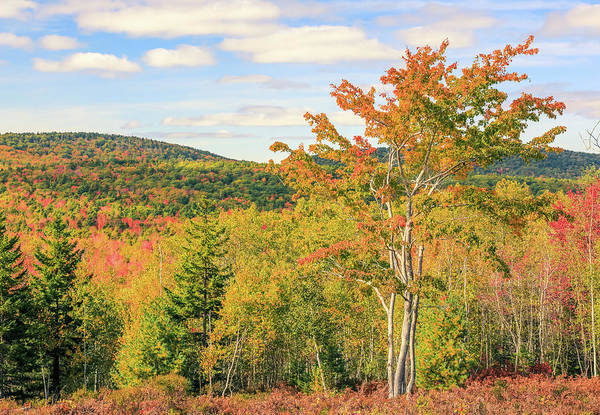 Wall Art - Photograph - Fall Foliage In Acadia National Park by Dan Sproul