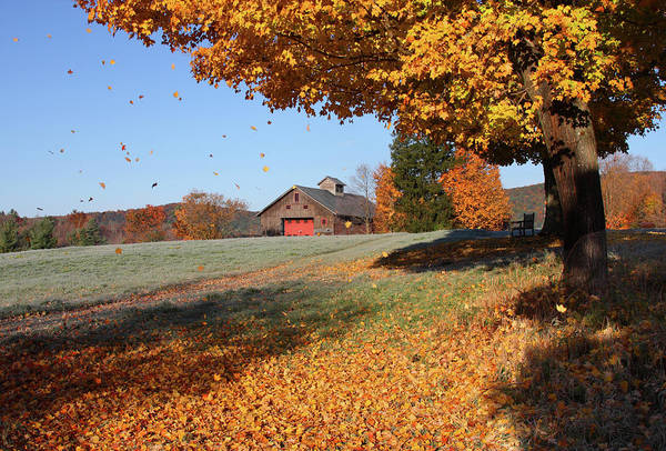 New England Autumn Photograph - Fall Foliage In Connecticut by Denistangneyjr