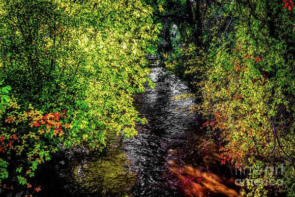 Photograph - Fall Foliage by Jon Burch Photography
