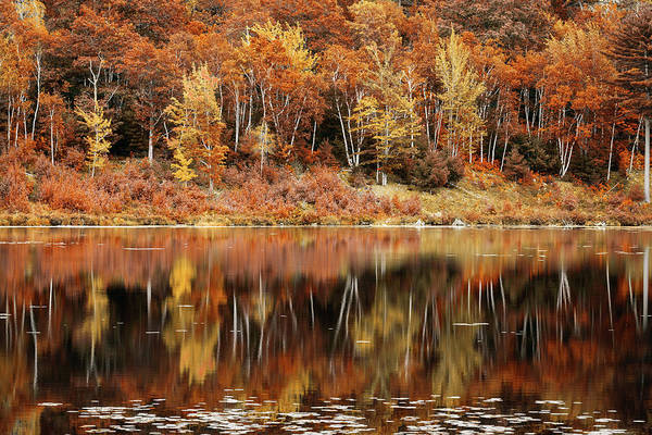 Wall Art - Photograph - Fall Foliage Reflection In Jordan Pond, Maine by Mihai Andritoiu