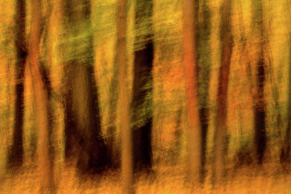 Photograph - Fall Forest Swipe II by Don Johnson