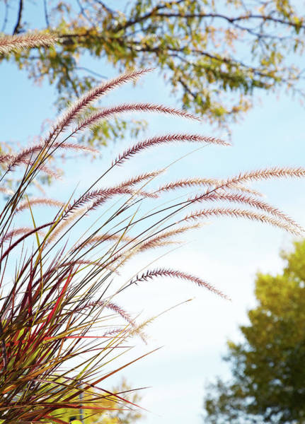 Photograph - Fall Grasses by Garden Gate magazine