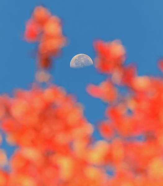 Wall Art - Photograph - Fall Half Moon by Dan Sproul