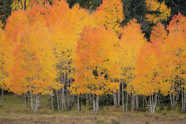 Photograph - Fall Has Arrived by Michael Monahan