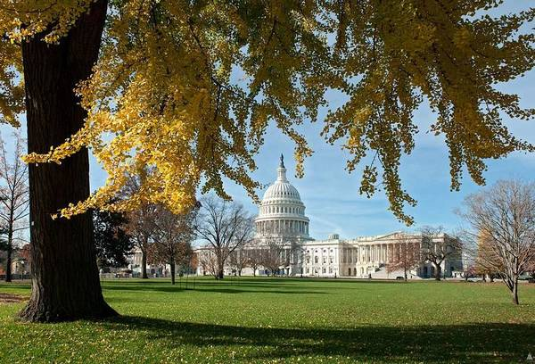 Wall Art - Painting - Fall In Us Capitol National Garden 10 by Celestial Images
