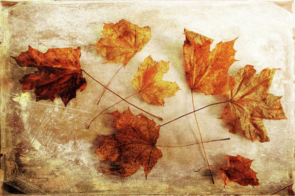 Photograph - Fall Keepers by Randi Grace Nilsberg