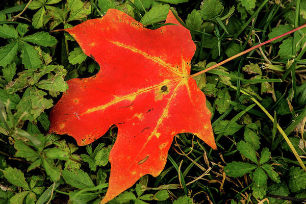 Photograph - Fall Leaf by Don Johnson
