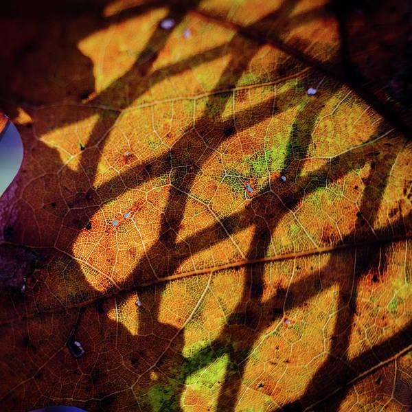 Photograph - Fall Leave On A Summer Table by Glenn DiPaola
