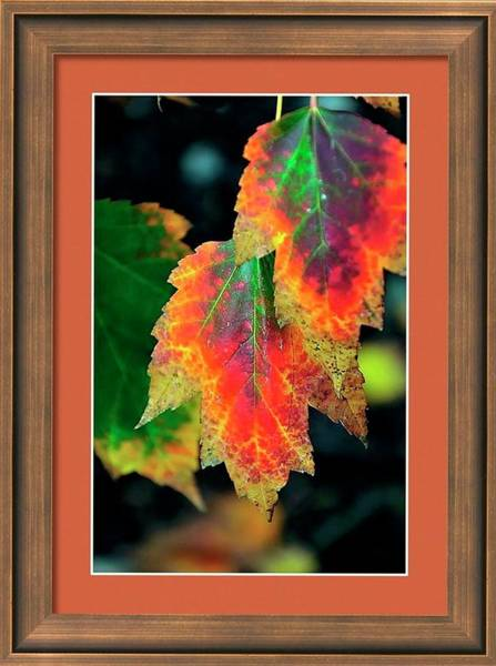 Photograph - Fall Leaves 6072 Framed by Jerry Sodorff