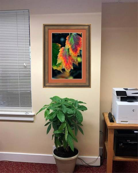 Photograph - Fall Leaves 6072 Framed Otw by Jerry Sodorff
