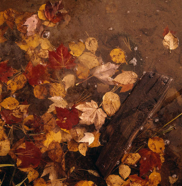 Vertical Landscape Photograph - Fall Leaves In Water by Robert Natkin