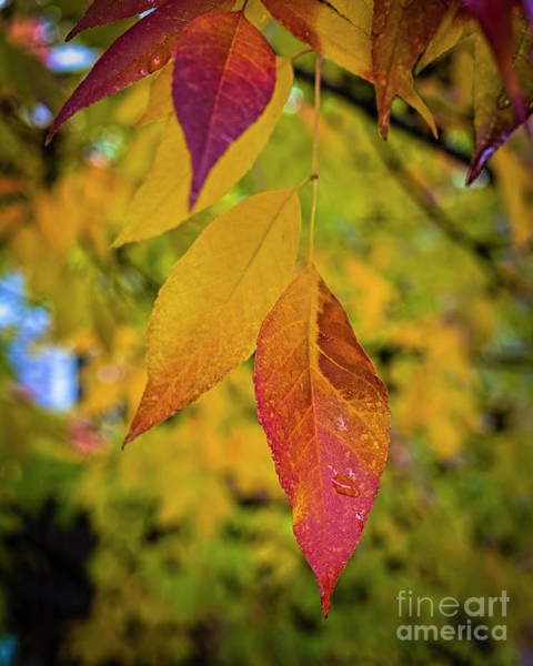Photograph - Fall Leaves by Jon Burch Photography