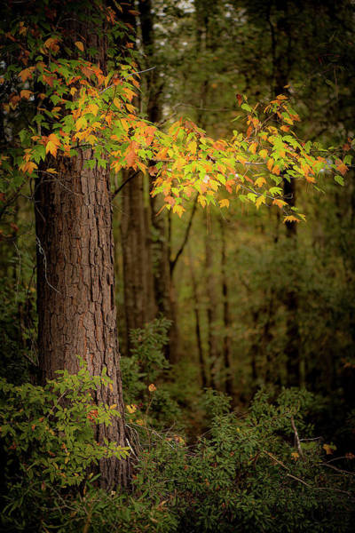 Photograph - Fall Leaves by Karen Rispin