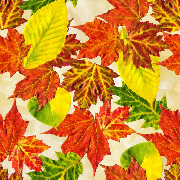 Wall Art - Mixed Media - Fall Leaves Pattern by Christina Rollo