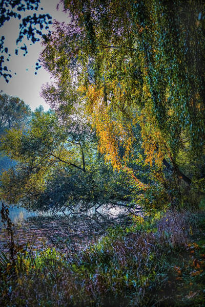 Photograph - Fall Light #i0 by Leif Sohlman