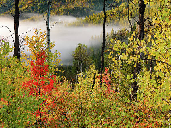 Photograph - Fall Morning 2 by Leland D Howard
