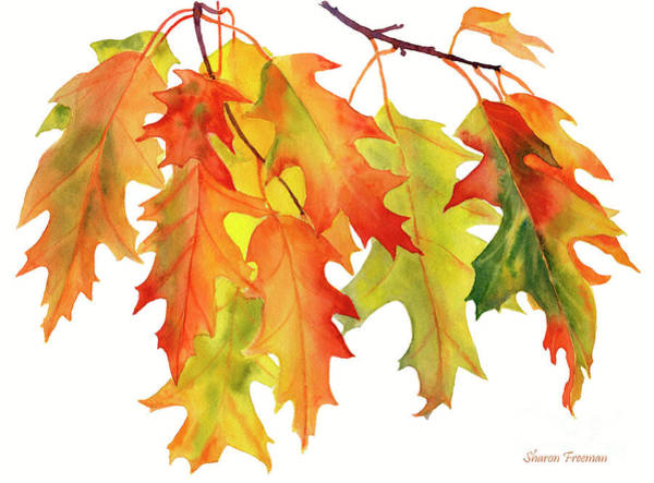 Wall Art - Painting - Fall Oak Leaves 2 by Sharon Freeman