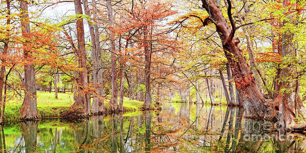 Bald Cypress Photograph - Fall Panorama Of Blue Hole Regional Park In Wimberley Hays County Texas Hill Country by Silvio Ligutti