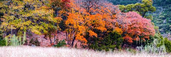 Wall Art - Photograph - Fall Panorama Of Changing Bigtooth Maples At Lost Maples State Natural Area - Texas Hill Country by Silvio Ligutti