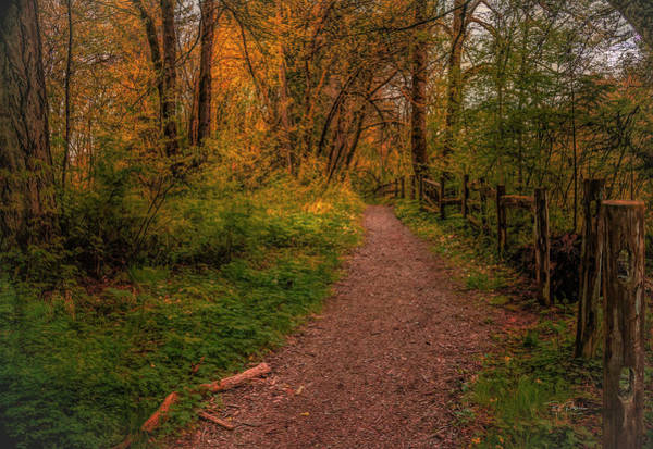 Photograph - Fall Path by Bill Posner