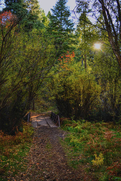 Photograph - Fall Path by Chance Kafka