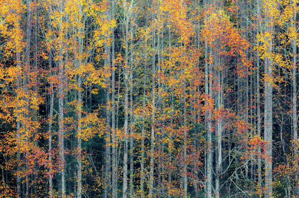 Photograph - Fall Patterns Pisgah Forest by Donnie Whitaker