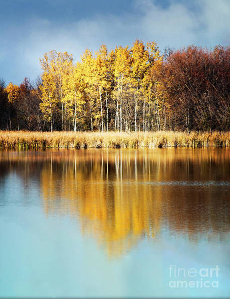Photograph - Fall Reflection by Scott Kemper