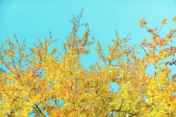 Photograph - Fall Season II by Anne Leven