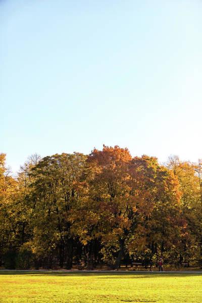 Photograph - Fall Season IIi by Anne Leven