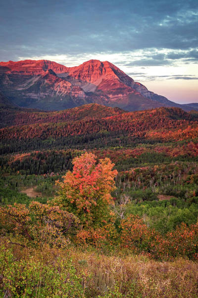 Photograph - Fall Splendor In Morning Light by Johnny Adolphson